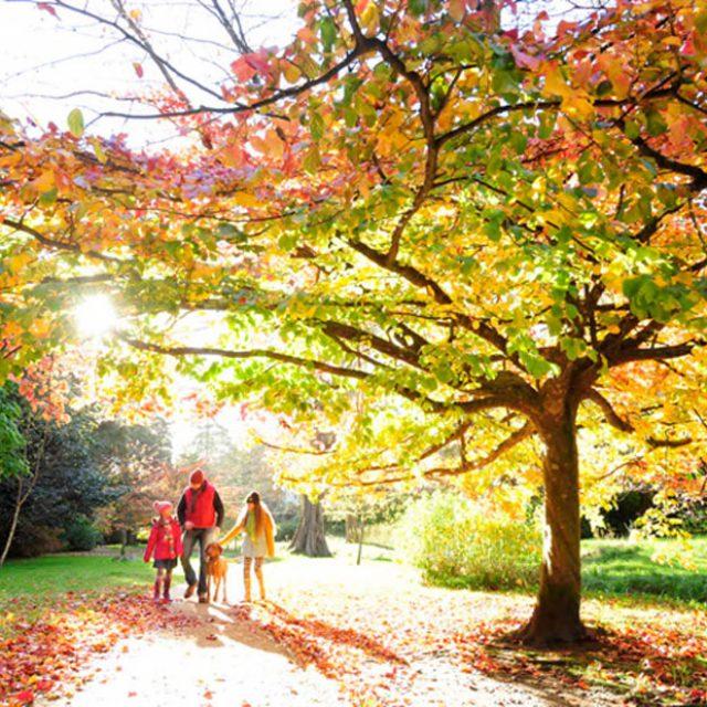 Family enjoying an autumn walk through Bournemouth gardens