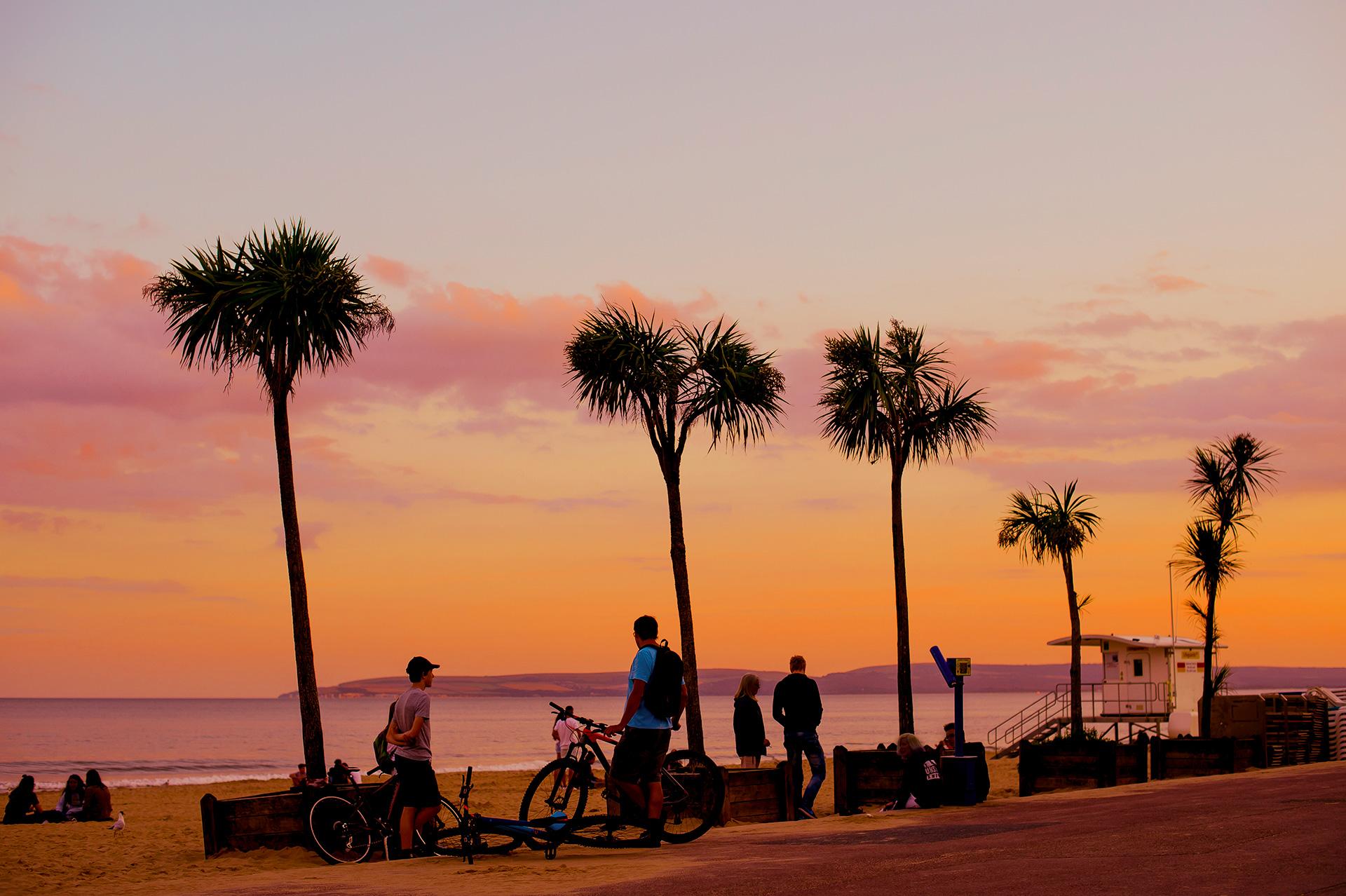 California style orange sky and palm tree