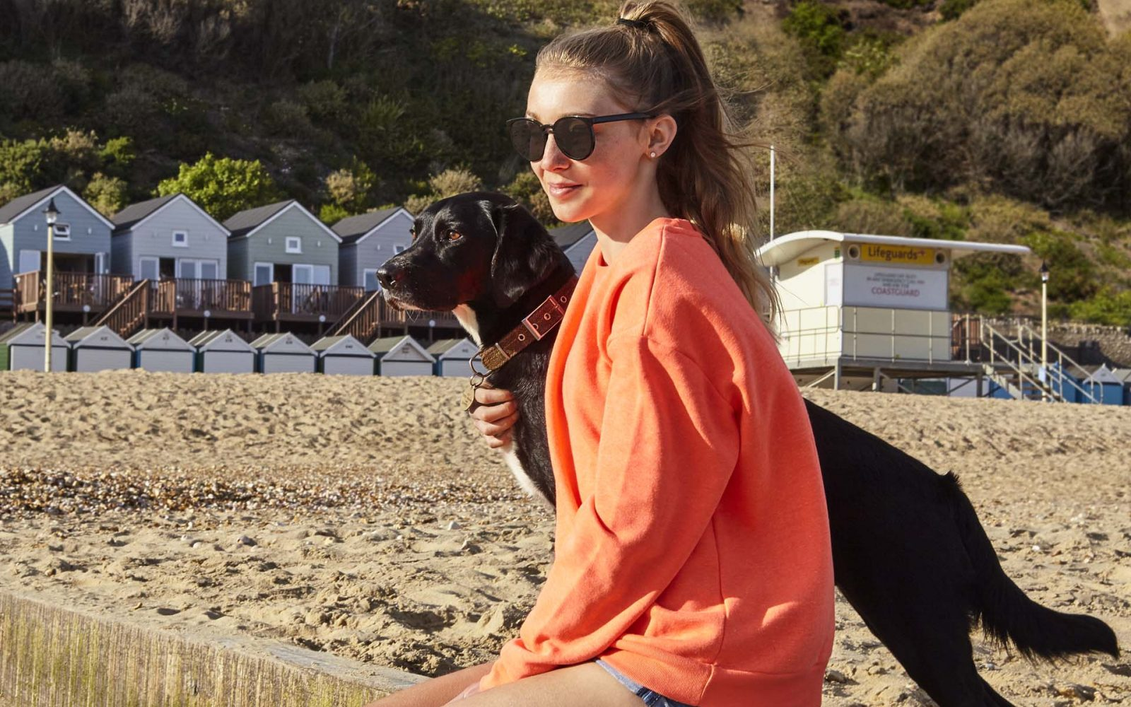 Teenage and gorgeous dog on Lodge beach in Bournemouth