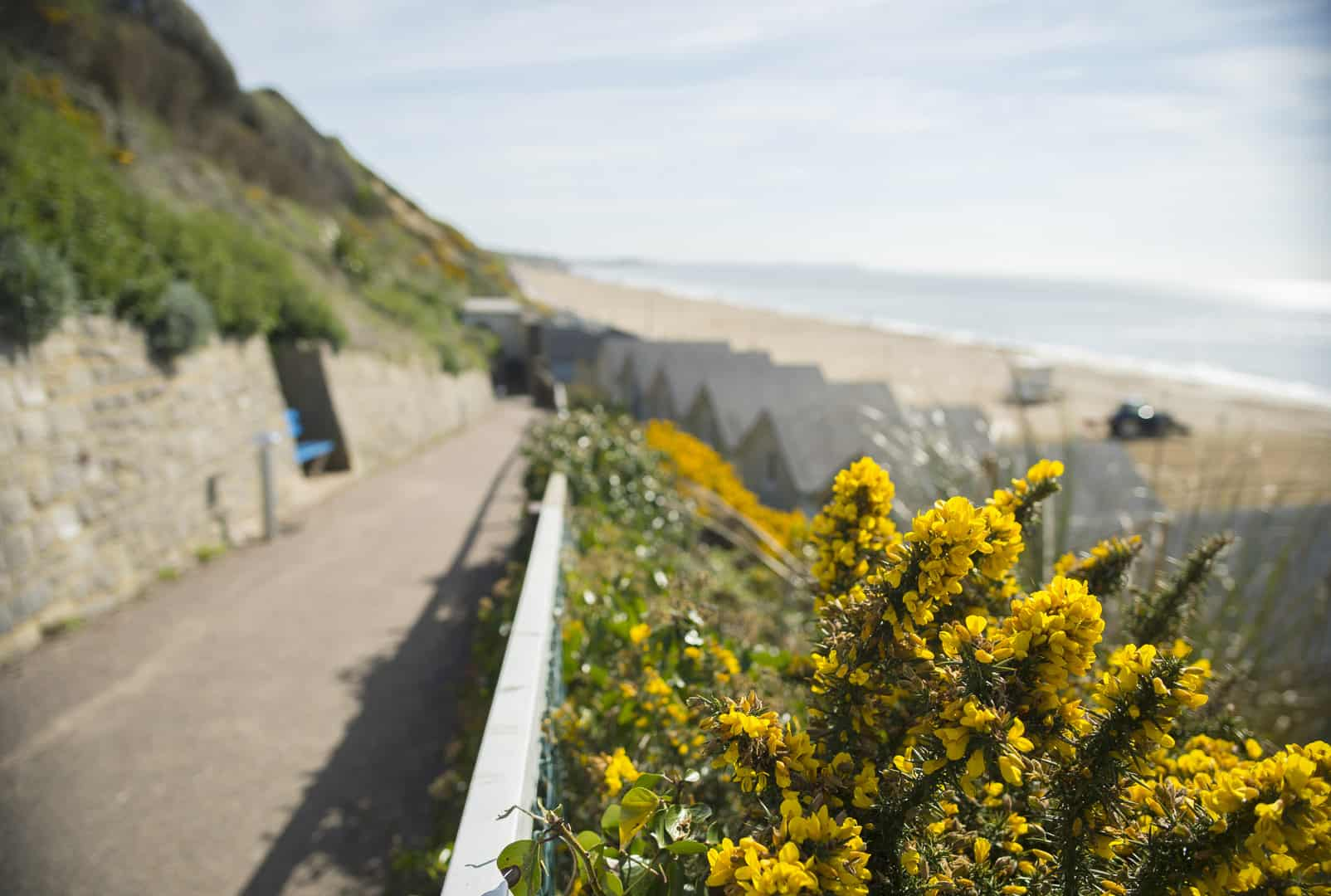 Lovely shot of flowers blooming on the Zig zag walk down to the Beach Lodges